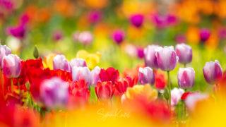 Photo: campus botanicus - Wo sich Gartenfreunde treffen